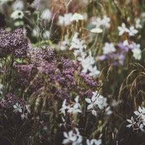 Energe rostlin - naše Bachovy esence