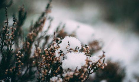 Energie rostlin - vánoční dárek se smyslem, exkluzivní vánoční dárek, dárkový poukaz - Bachovy esence