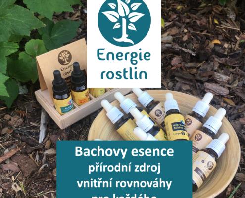 Revue50plus -články o Bachových esencích Energie rostlin