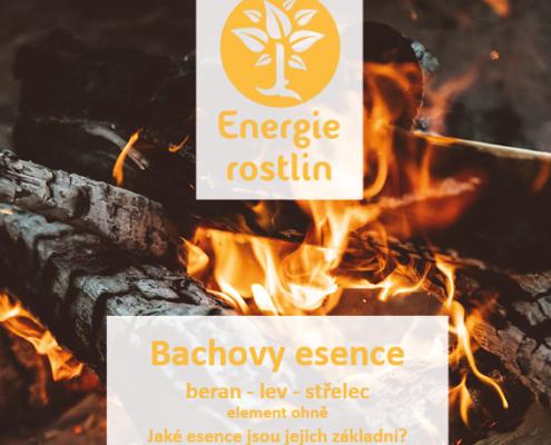 vedená meditace k Bachovým květům