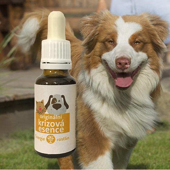 Rescue remedy - pro psy a kočky krizovka