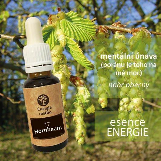 17 - Hornbeam - esence energie - mentální únava