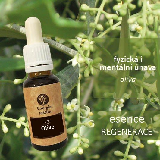 23 - Olive - esence regenerace - fyzická i mentální únava
