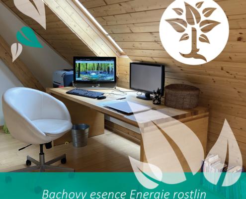 online webinář o Bachových esencích Energie rostlin
